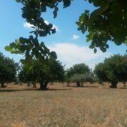 I nostri alberi
